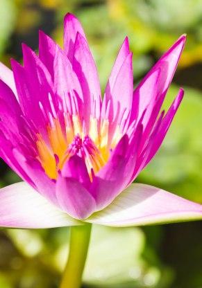 lotusPartoAlegre